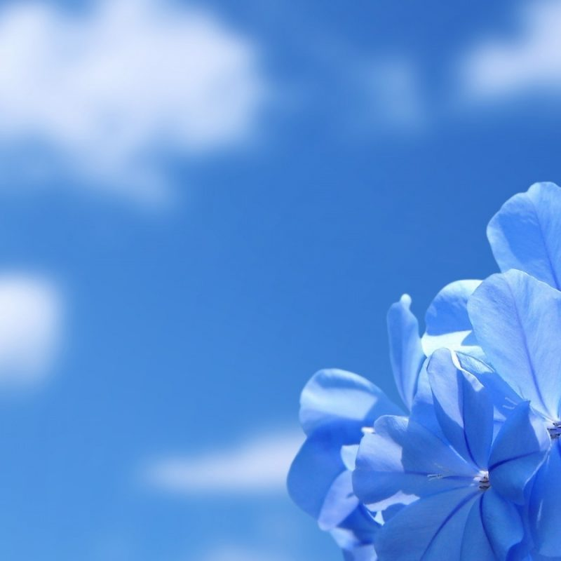 10 Latest Desktop Wallpaper Hd Flowers FULL HD 1920×1080 For PC Background 2020 free download blue flowers e29da4 4k hd desktop wallpaper for 4k ultra hd tv e280a2 wide 1 800x800