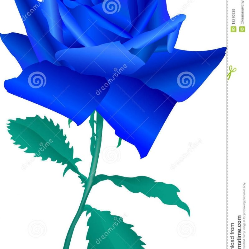 10 New Blue Roses Images Free FULL HD 1920×1080 For PC Background 2020 free download blue rose stock vector illustration of love gift budded 18270939 800x800