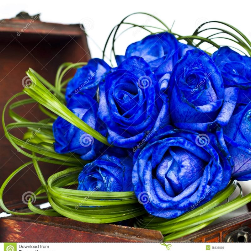 10 New Blue Roses Images Free FULL HD 1920×1080 For PC Background 2020 free download blue roses bouquet stock image image of bridal elegant 35635595 800x800