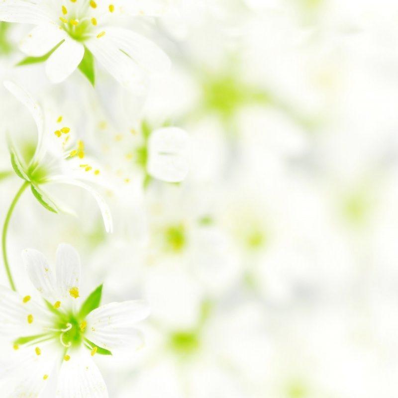 10 Latest White Flower Wall Paper FULL HD 1920×1080 For PC Desktop 2018 free download blurred white flowers e29da4 4k hd desktop wallpaper for 4k ultra hd tv 800x800