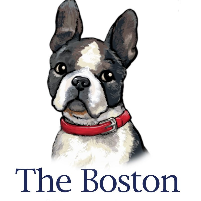 10 Latest Boston Terrier Wall Paper FULL HD 1920×1080 For PC Desktop 2018 free download boston terriers images bostons 3 hd wallpaper and background 800x800