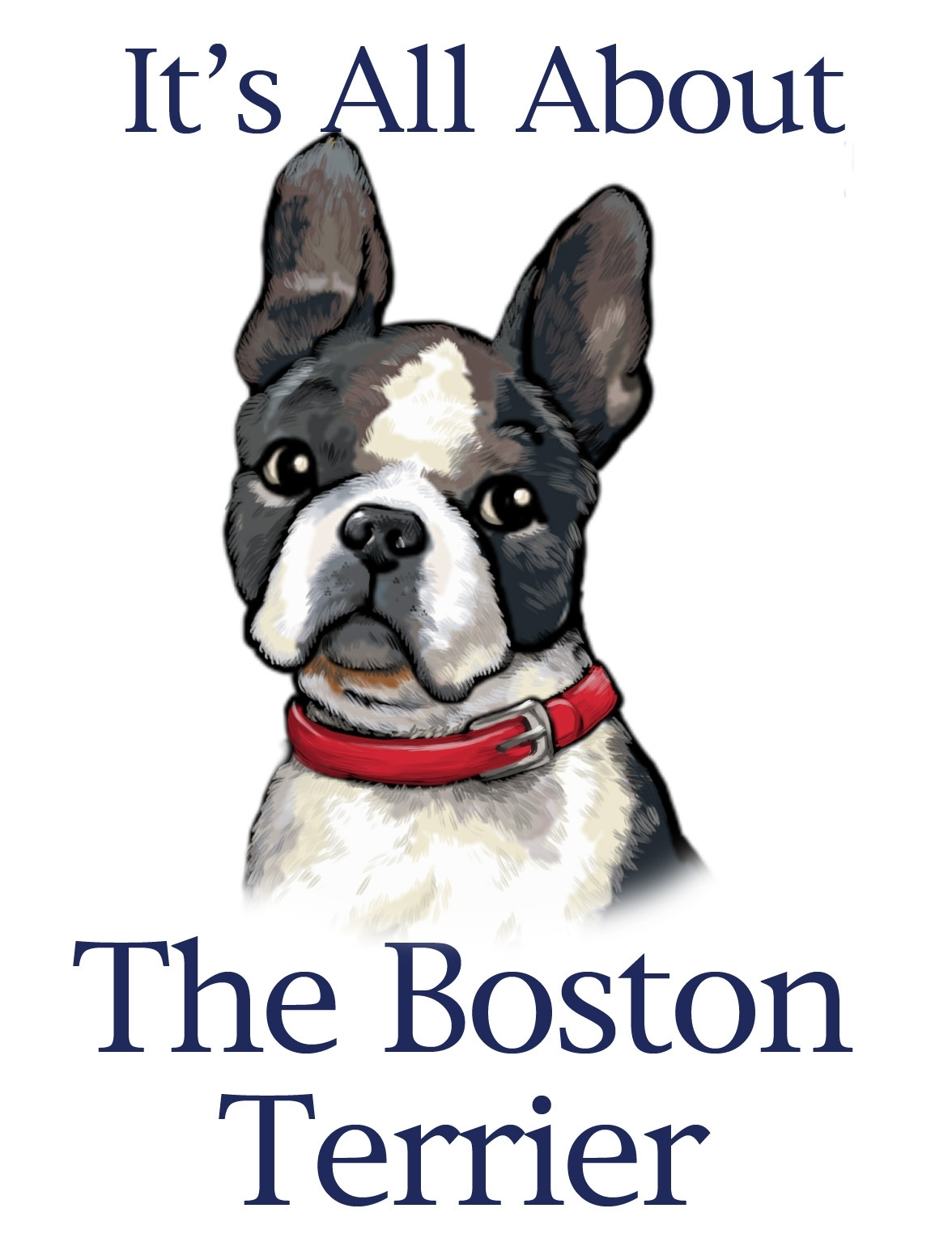 boston terriers images bostons! <3 hd wallpaper and background
