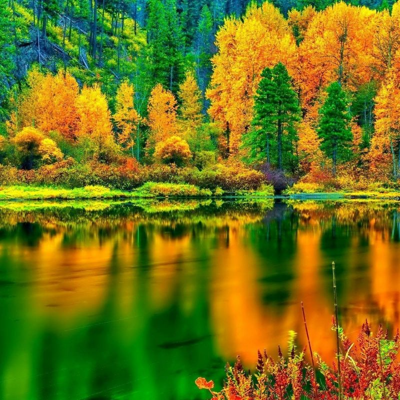 10 Latest Fall Colors Desktop Wallpaper FULL HD 1080p For PC Desktop 2020 free download breathtaking autumn colors hd desktop wallpaper widescreen high 800x800