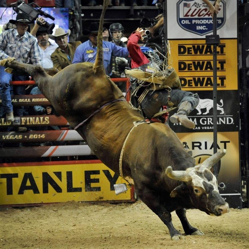 10 Best Professional Bull Riders Inc FULL HD 1920×1080 For PC Background 2021 free download bushwacker photos photos professional bull riders 21st world 1 800x800