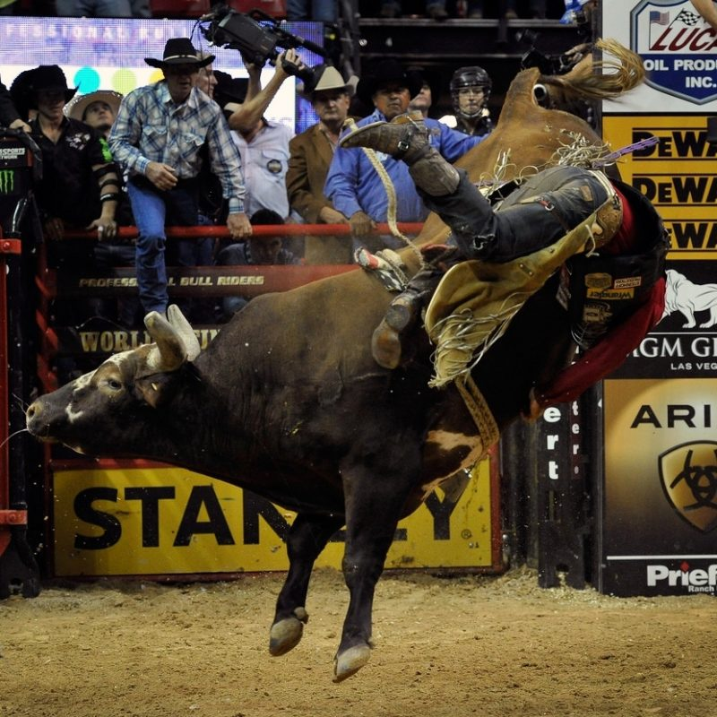 10 Best Professional Bull Riders Inc FULL HD 1920×1080 For PC Background 2021 free download bushwacker photos photos professional bull riders 21st world 800x800