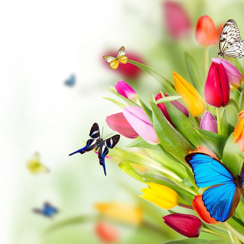 10 Latest Flowers And Butterflies Wallpaper FULL HD 1080p For PC Desktop 2020 free download butterfly backgrounds flowers butterflies wallpapers pictures 800x800