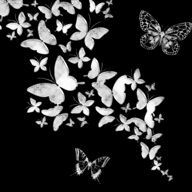10 Best Butterfly Wallpaper Black And White FULL HD 1920×1080 For PC Desktop 2018 free download butterfly wallpaper black and white top backgrounds wallpapers 800x800