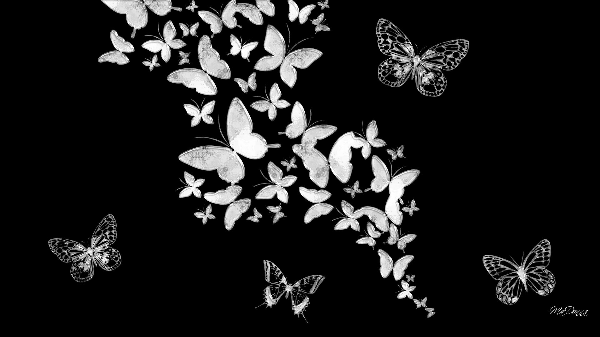 butterfly wallpaper black and white - top backgrounds & wallpapers