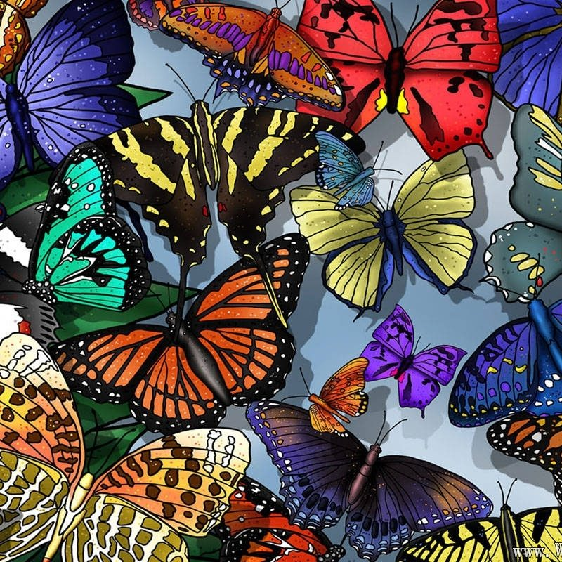 10 Most Popular Wallpapers Butterfly Free Download FULL HD 1080p For PC Background 2020 free download butterfly wallpapers free download 800x800