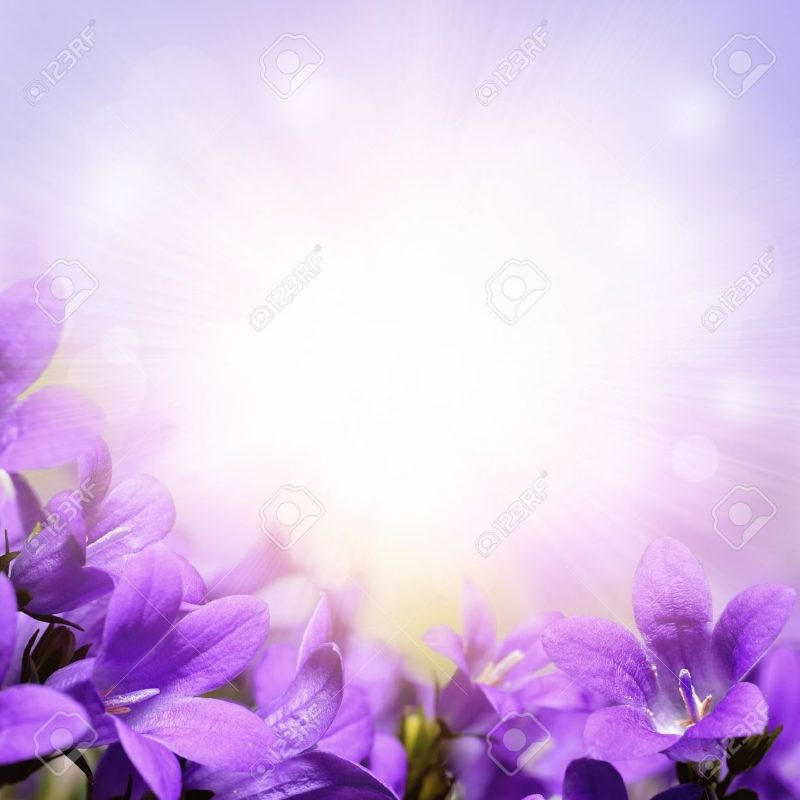 10 Most Popular Light Purple Flower Background FULL HD 1920×1080 For PC Desktop 2018 free download campanula purple spring flowers background stock photo picture and 800x800