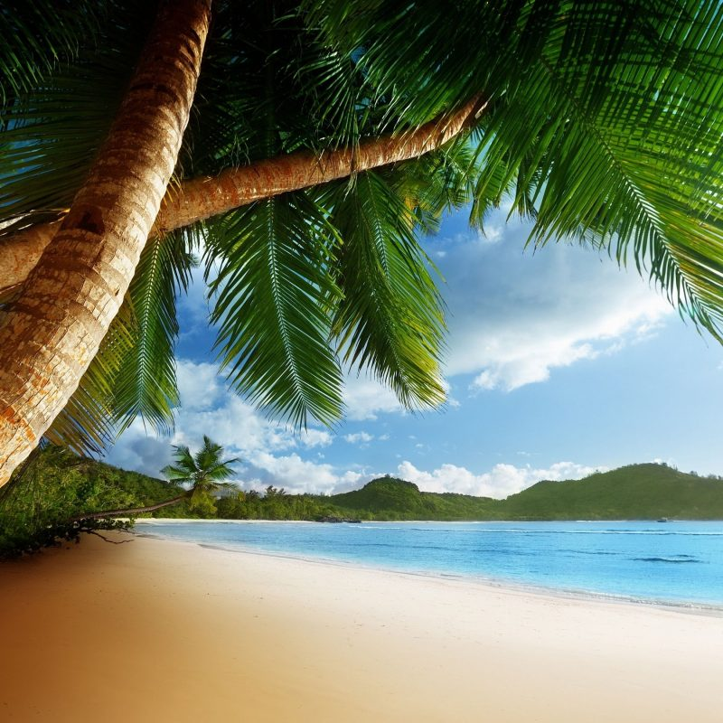 10 New Caribbean Beach Pictures Wallpaper FULL HD 1080p For PC Background 2018 free download caribbean beach desktop beaches pinterest desktop themes 800x800