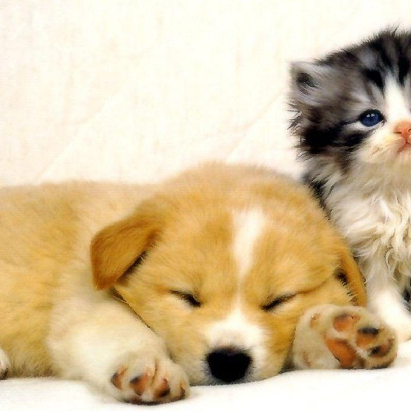 10 Most Popular Dog And Cat Wallpaper FULL HD 1080p For PC Background 2021 free download cat and dog wallpapers wallpaper cave 1 800x800