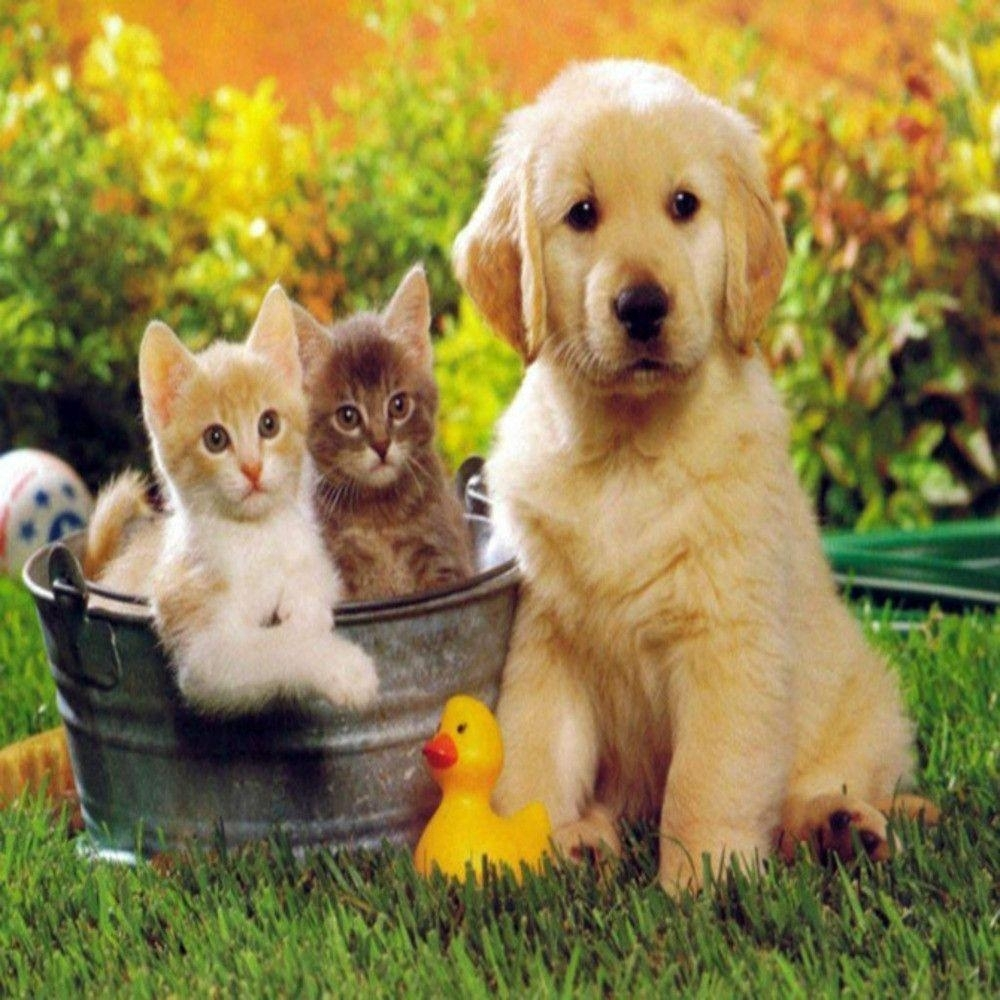 cat and dog wallpapers - wallpaper cave