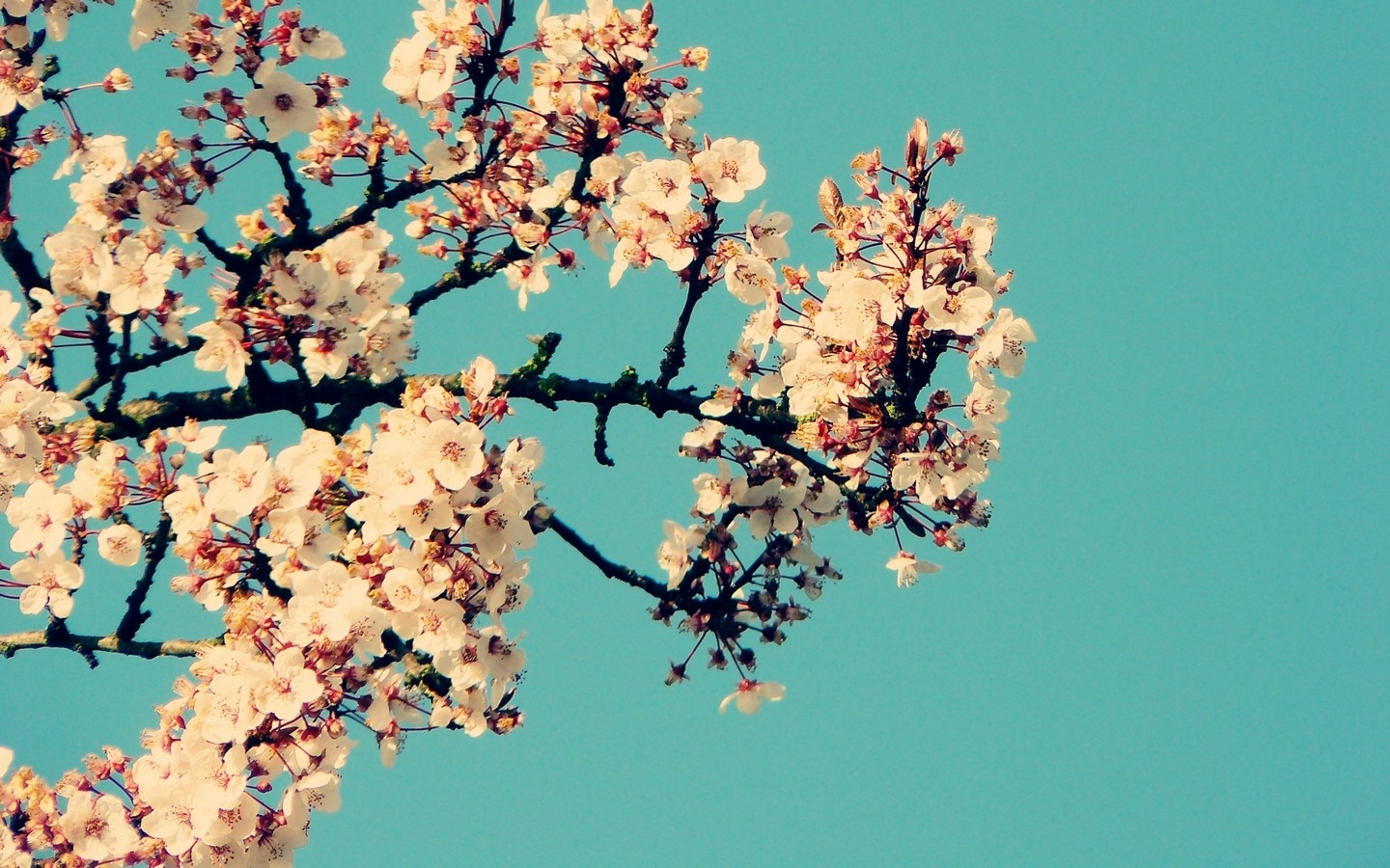 category tumblr page paperbirchwine pics widescreen flower desktop