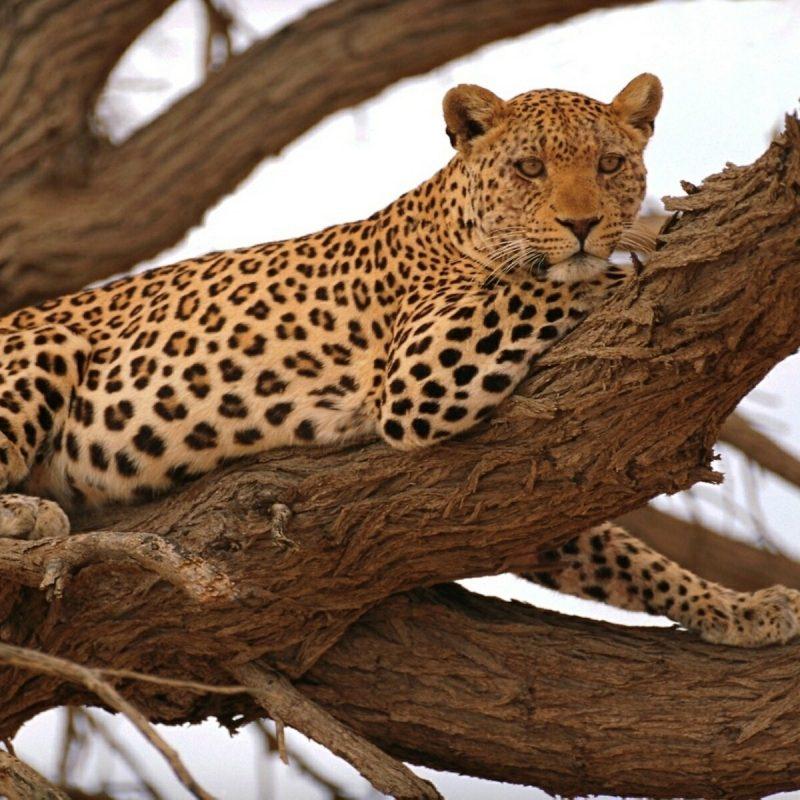 10 Best African Safari Animals Wallpaper FULL HD 1920×1080 For PC Desktop 2020 free download cats life safari animals savage african wild leopard cat 800x800