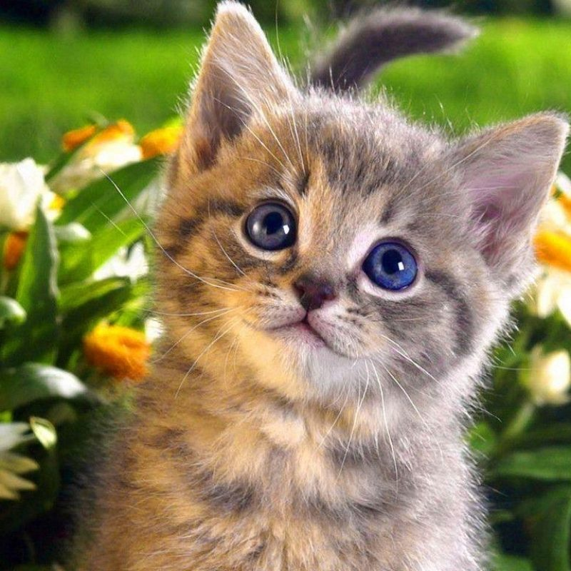 10 Latest Cat Wallpapers Free Download FULL HD 1920×1080 For PC Desktop 2021 free download cats wallpapers wallpaper cave 800x800