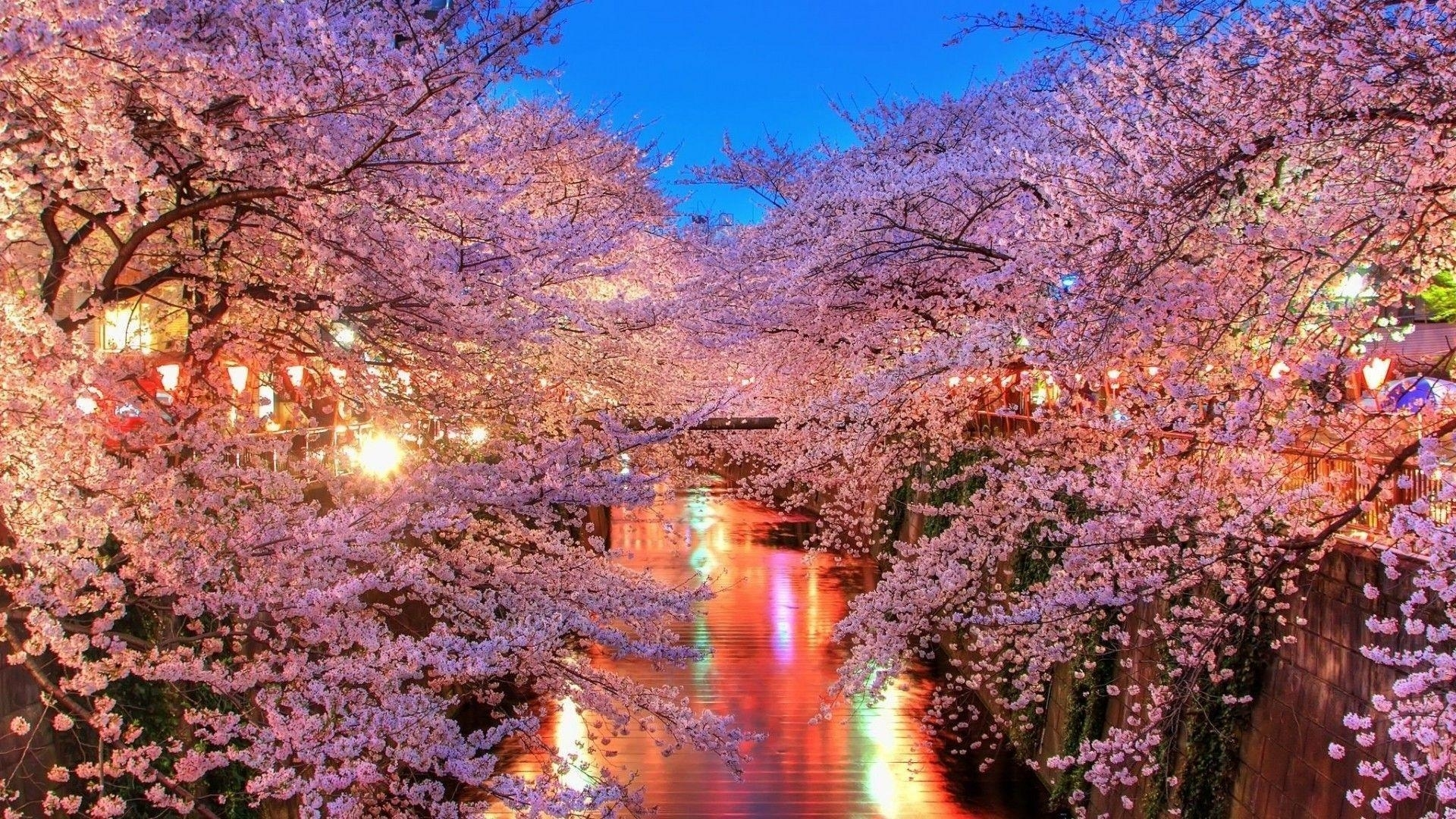 cherry blossom desktop backgrounds - wallpaper cave