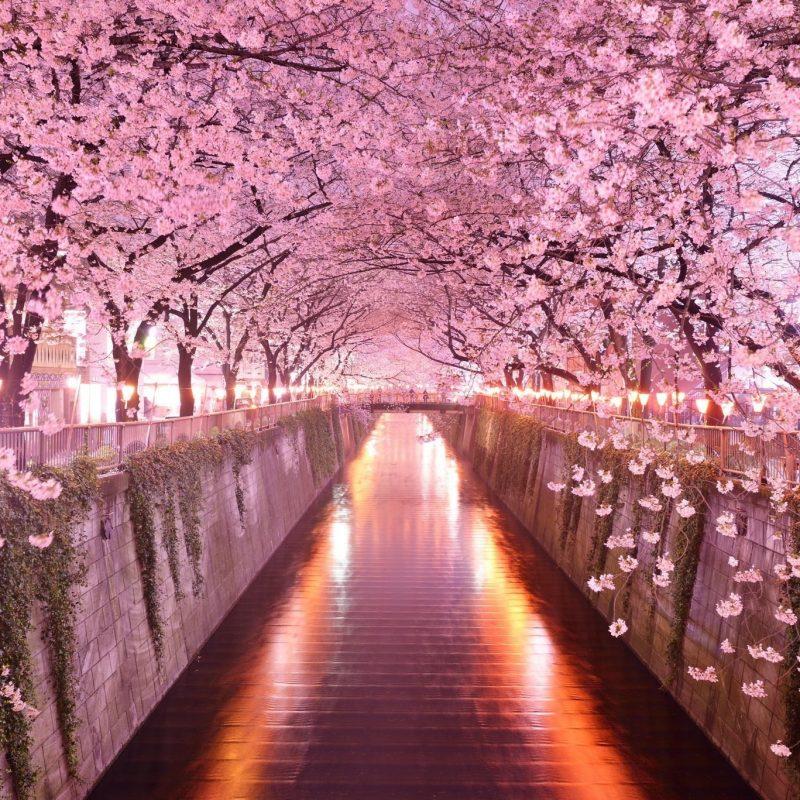 10 Top Cherry Blossom Desktop Wallpaper FULL HD 1080p For PC Desktop 2020 free download cherry blossom desktop wallpaper c2b7e291a0 5 800x800
