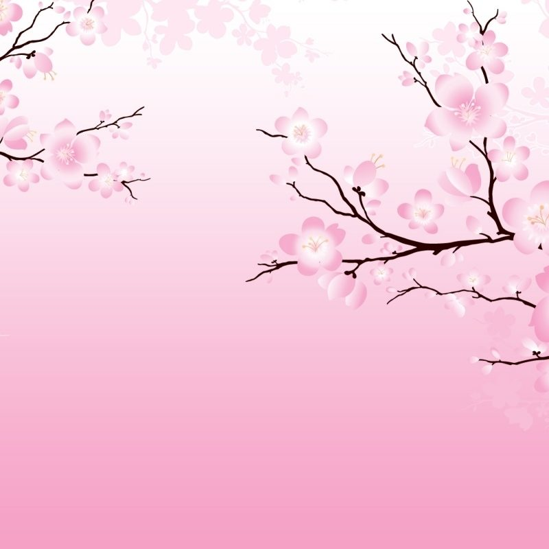 10 Most Popular Cherry Blossom Wallpaper Anime FULL HD 1920×1080 For PC Desktop 2018 free download cherry blossom wallpaper 6558 1280x800 px hdwallsource 800x800