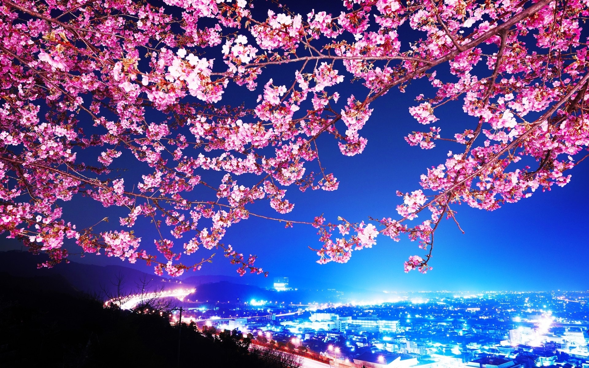 cherry blossom wallpaper night wallpaper wide - download hd cherry