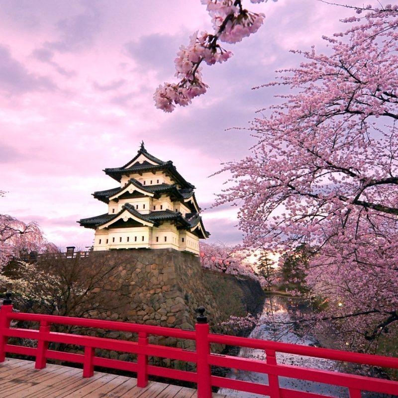10 New Hd Wallpapers Cherry Blossom FULL HD 1080p For PC Desktop 2021 free download cherry blossoms japan e29da4 4k hd desktop wallpaper for 4k ultra hd tv 2 800x800