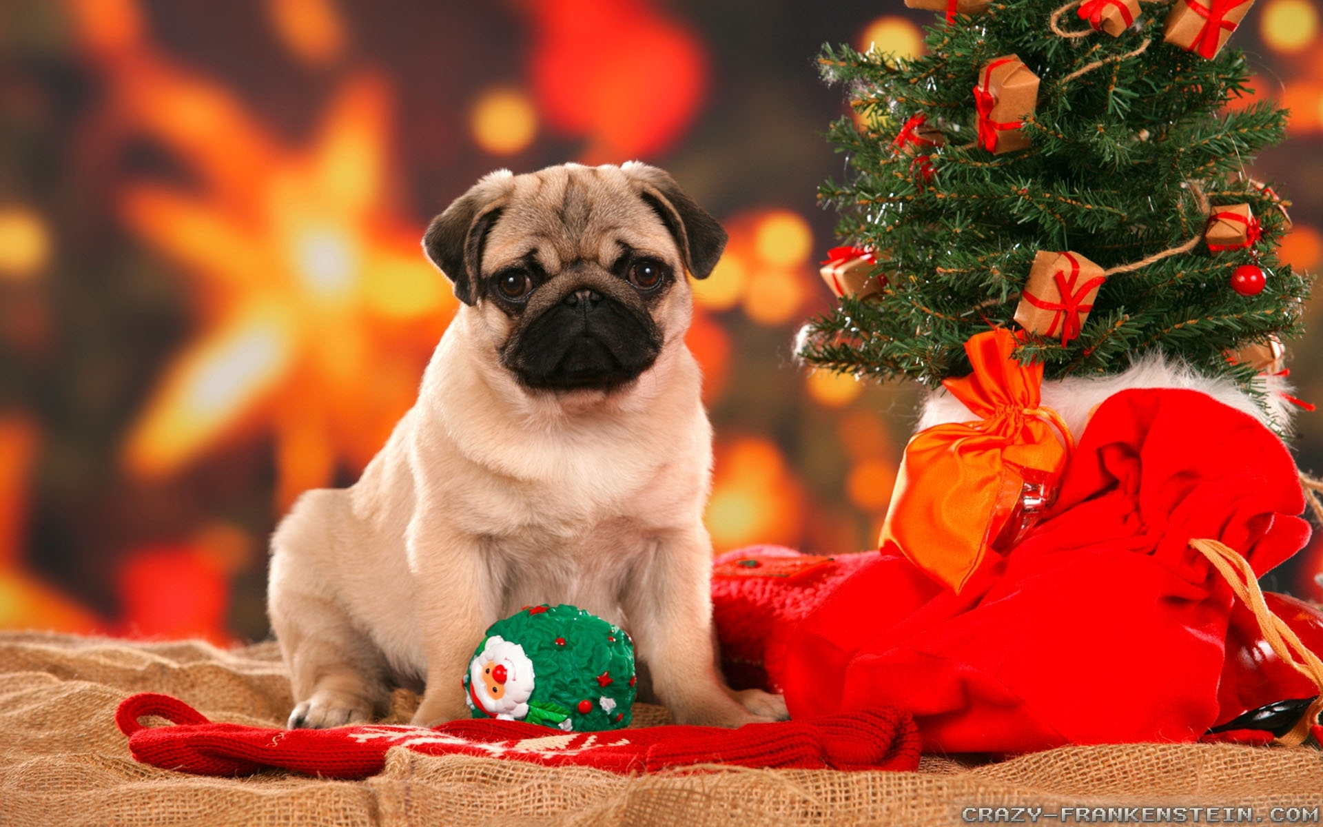 christmas dog wallpapers - crazy frankenstein