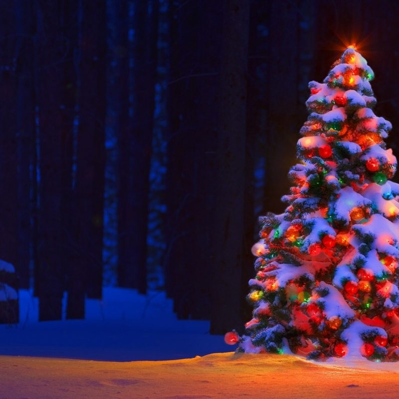10 New Christmas Tree Wallpaper Hd FULL HD 1080p For PC Background 2021 free download christmas lights tree desktop backgrounds wallpaper wiki 2 800x800