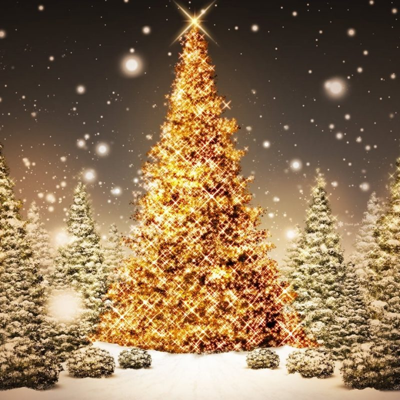 10 New Christmas Lights Wallpaper Hd Widescreen FULL HD 1080p For PC Background 2020 free download christmas lights widescreen wallpaper media file pixelstalk 800x800