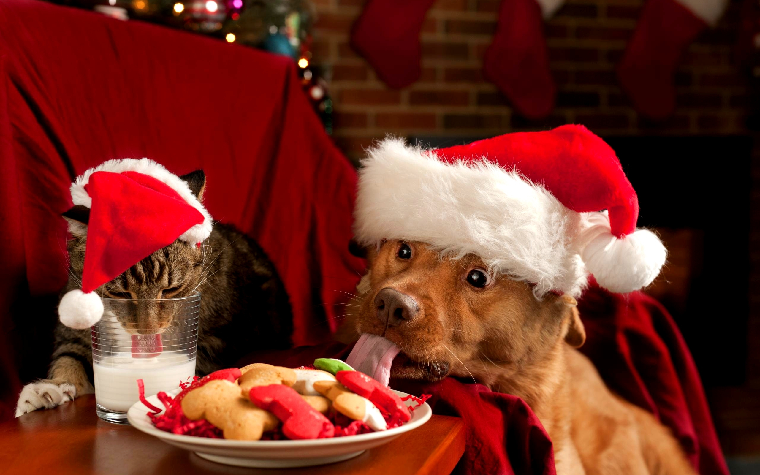 christmas puppies and kittens wallpaper :these wallpaper backgrounds