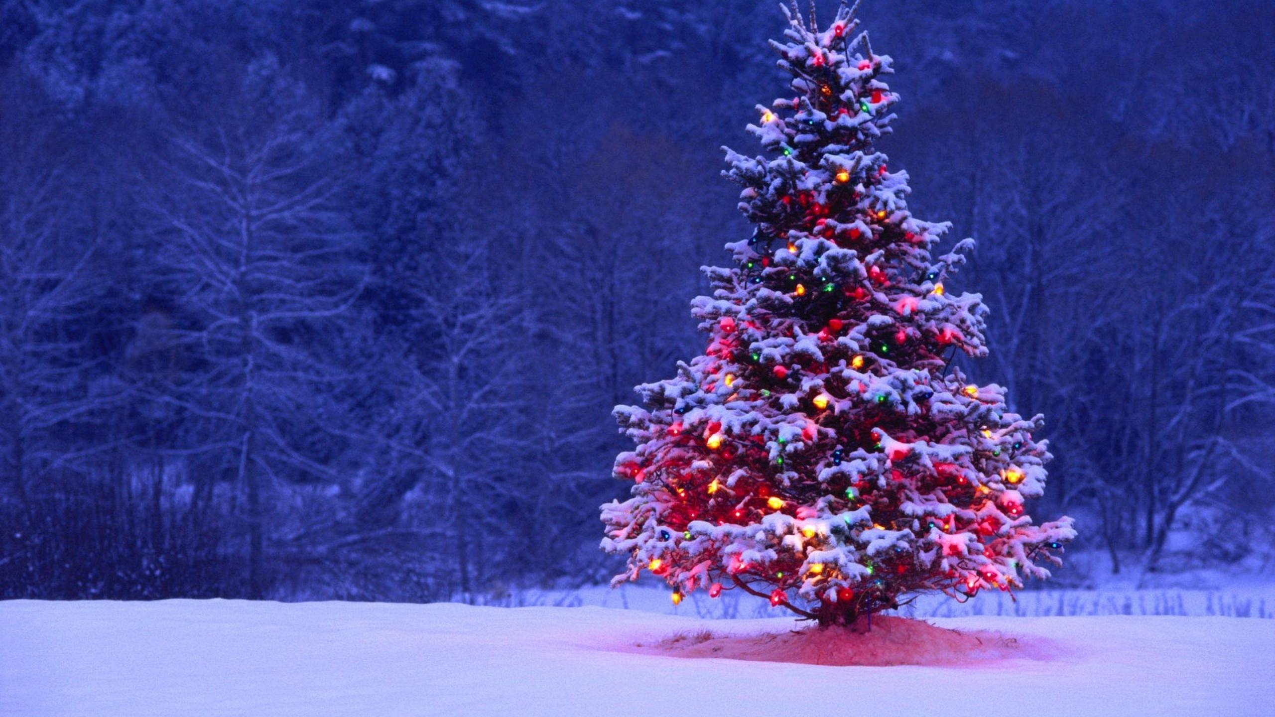 christmas tree lights snow forest holiday desktop wallpaper