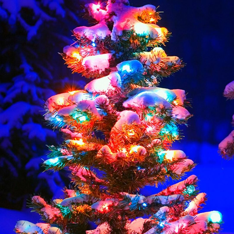 10 Best Christmas Tree Phone Wallpaper FULL HD 1080p For PC Background 2021 free download christmas tree lights snow mobile wallpaper phone background 800x800