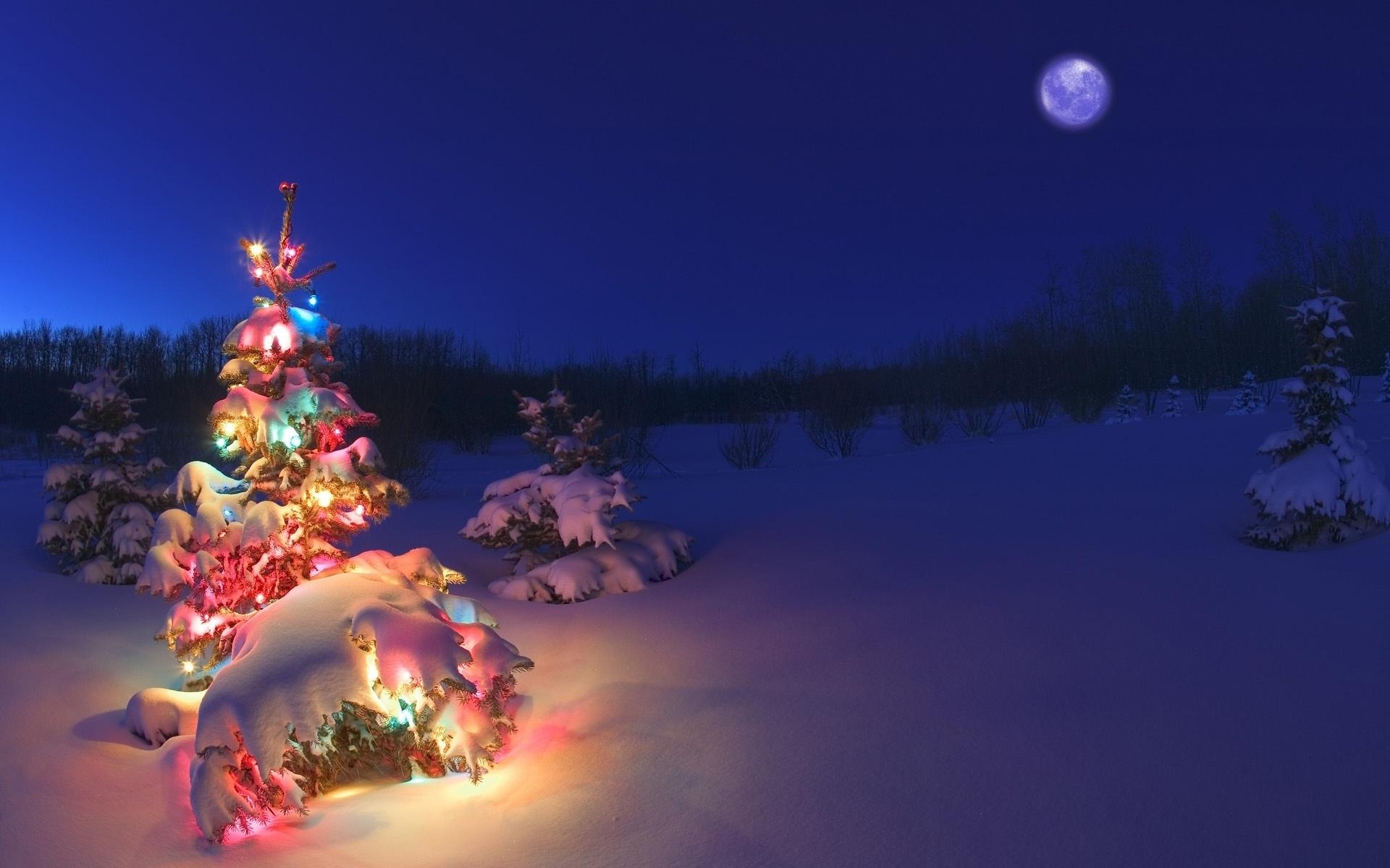 christmas tree lights snow wallpaper hd. - media file | pixelstalk
