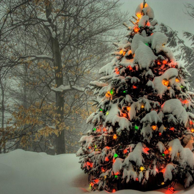 10 New Christmas Tree Wallpaper Hd FULL HD 1080p For PC Background 2021 free download christmas tree outside e29da4 4k hd desktop wallpaper for 4k ultra hd tv 1 800x800
