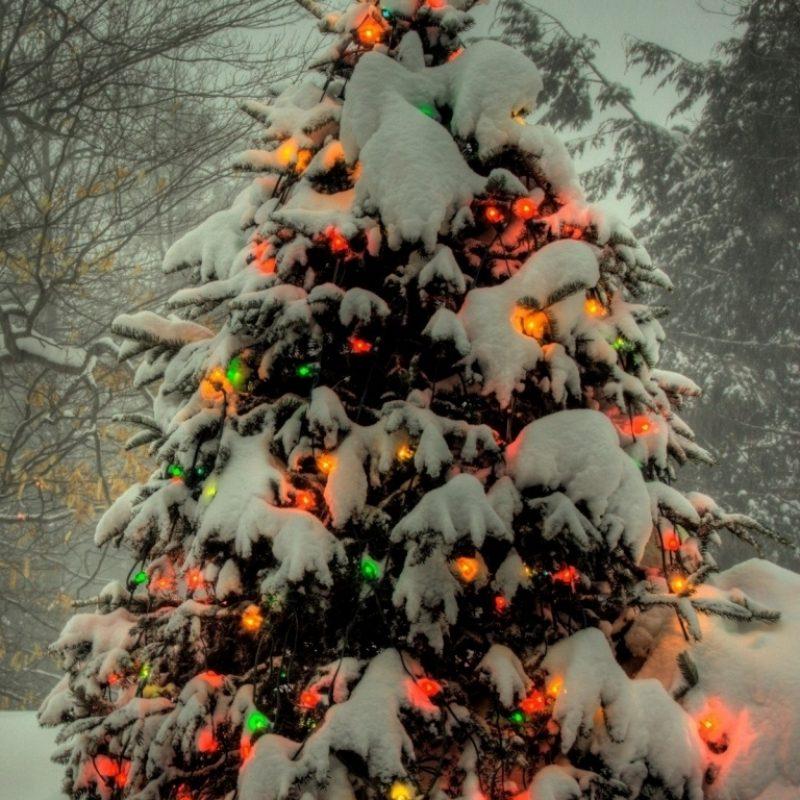 10 Best Christmas Tree Phone Wallpaper FULL HD 1080p For PC Background 2021 free download christmas tree outside e29da4 4k hd desktop wallpaper for 4k ultra hd tv 800x800