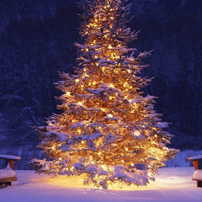 10 Top Christmas Tree Wallpaper Backgrounds FULL HD 1920×1080 For PC Background 2021 free download christmas tree wallpaper 23 800x800