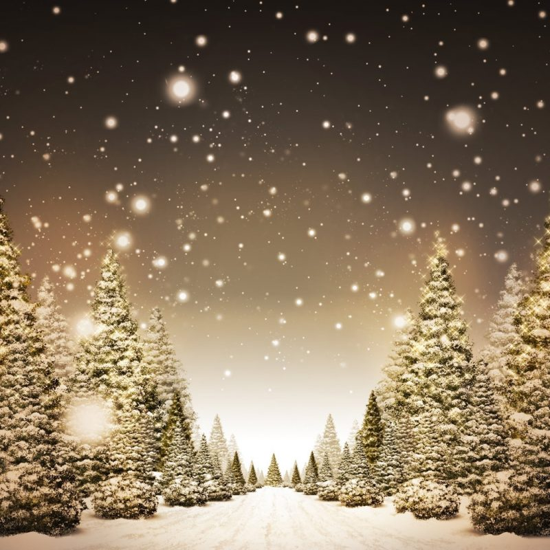 10 Most Popular Christmas Tree Snow Wallpaper Hd FULL HD 1080p For PC Desktop 2020 free download christmas trees in snow hd wallpaper fullhdwpp full hd 800x800