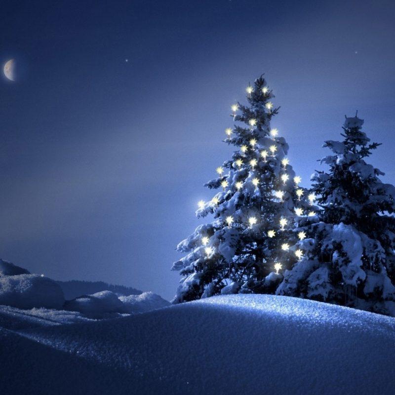 10 Most Popular Christmas Tree Snow Wallpaper Hd FULL HD 1080p For PC Desktop 2020 free download christmas trees in the snow wallpaper 4058 background wallpaper hd 800x800