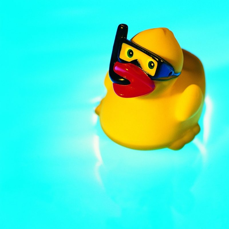10 Top Rubber Duck Wall Paper FULL HD 1080p For PC Background 2020 free download classy rubber duck hd desktop wallpaper instagram photo background 800x800