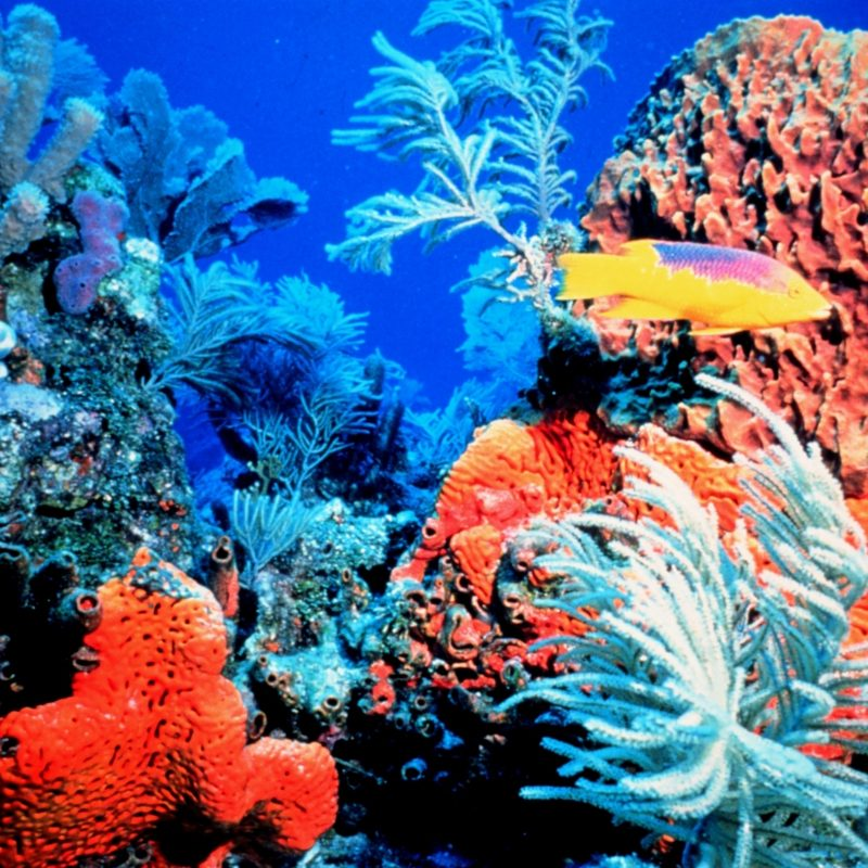 10 New Colorful Coral Reefs Wallpaper Hd FULL HD 1080p For PC Desktop 2020 free download colorful coral reef hd wallpapers 800x800