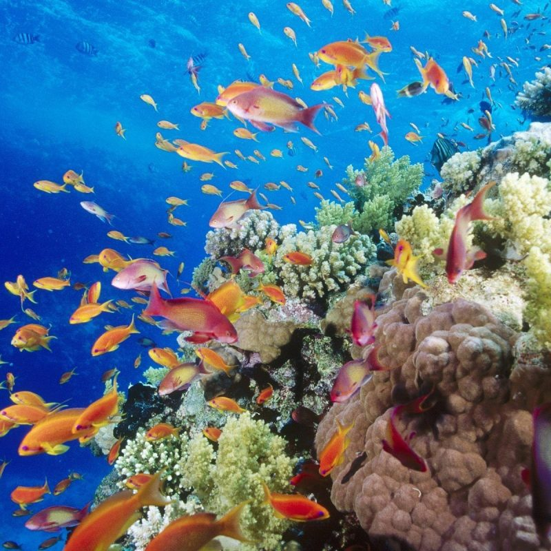 10 New Colorful Coral Reefs Wallpaper Hd FULL HD 1080p For PC Desktop 2020 free download colorful coral reef wallpaper hd mfx earth pinterest coral reefs 800x800
