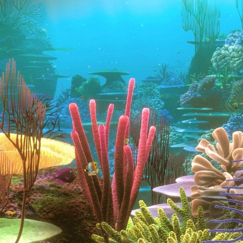 10 New Colorful Coral Reefs Wallpaper Hd FULL HD 1080p For PC Desktop 2020 free download colorful coral reef wallpaper photo vxs earth pinterest coral 800x800