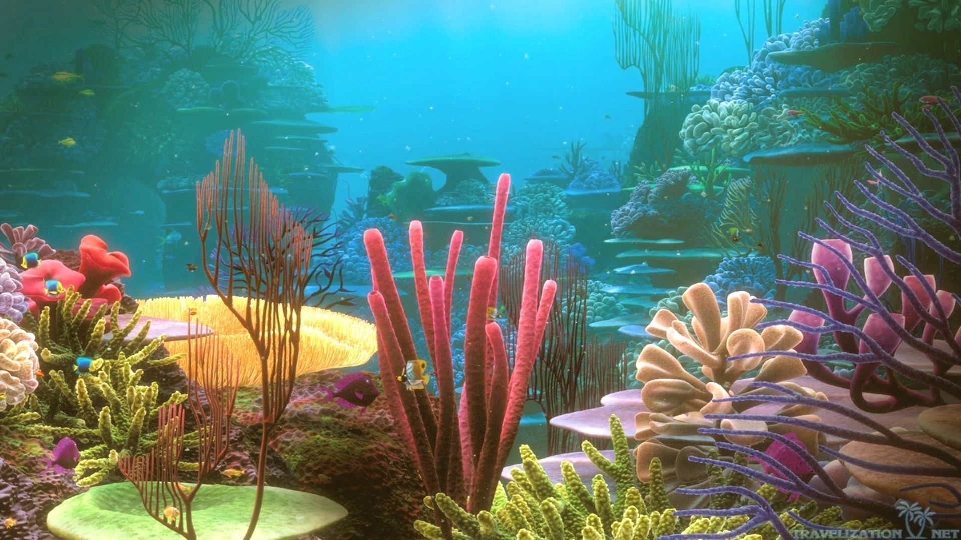 colorful coral reef wallpaper photo #vxs | earth | pinterest | coral