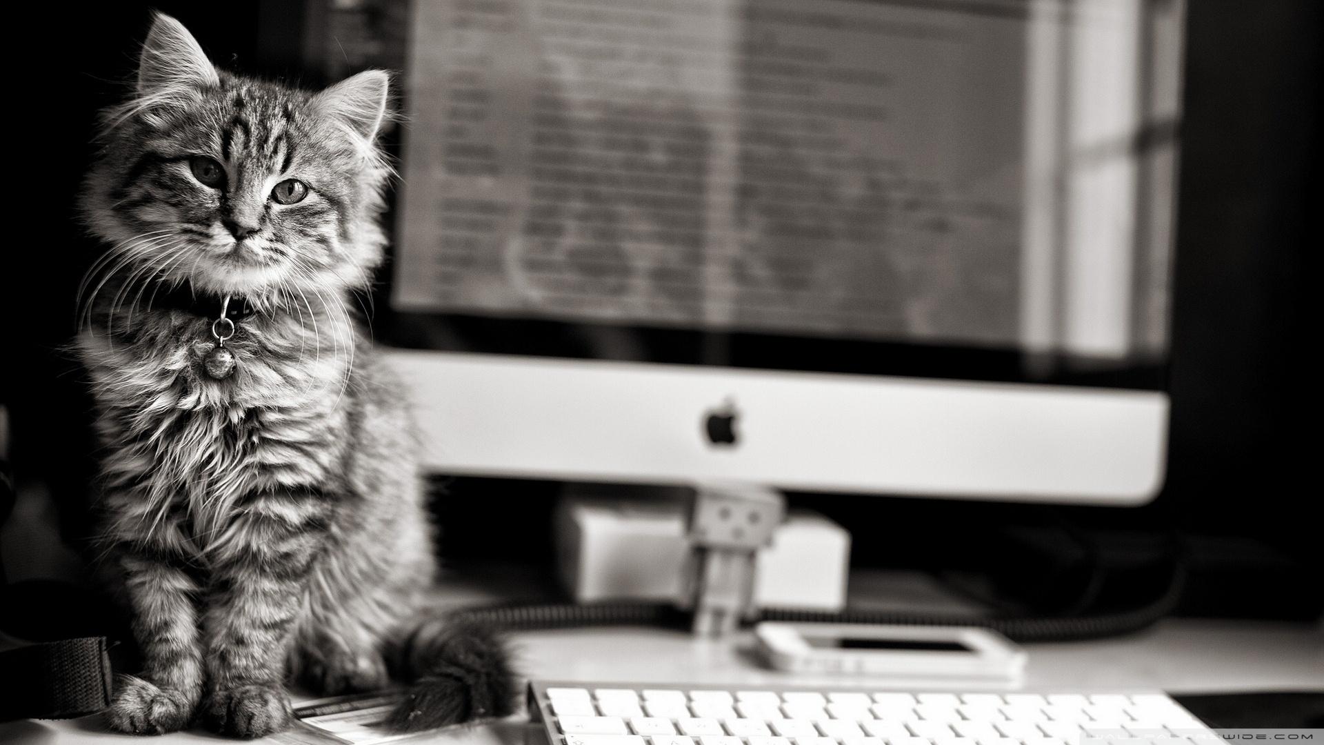 computer cat ❤ 4k hd desktop wallpaper for 4k ultra hd tv • tablet