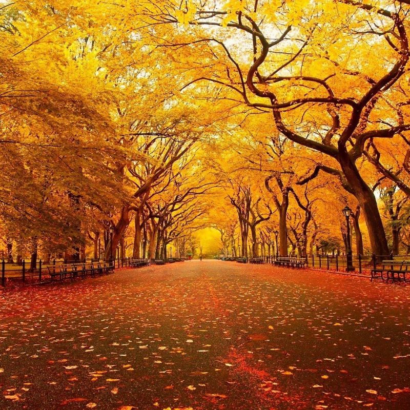 10 Best Fall Backgrounds For Pictures FULL HD 1080p For PC Background 2018 free download cool fall backgrounds collection 68 800x800
