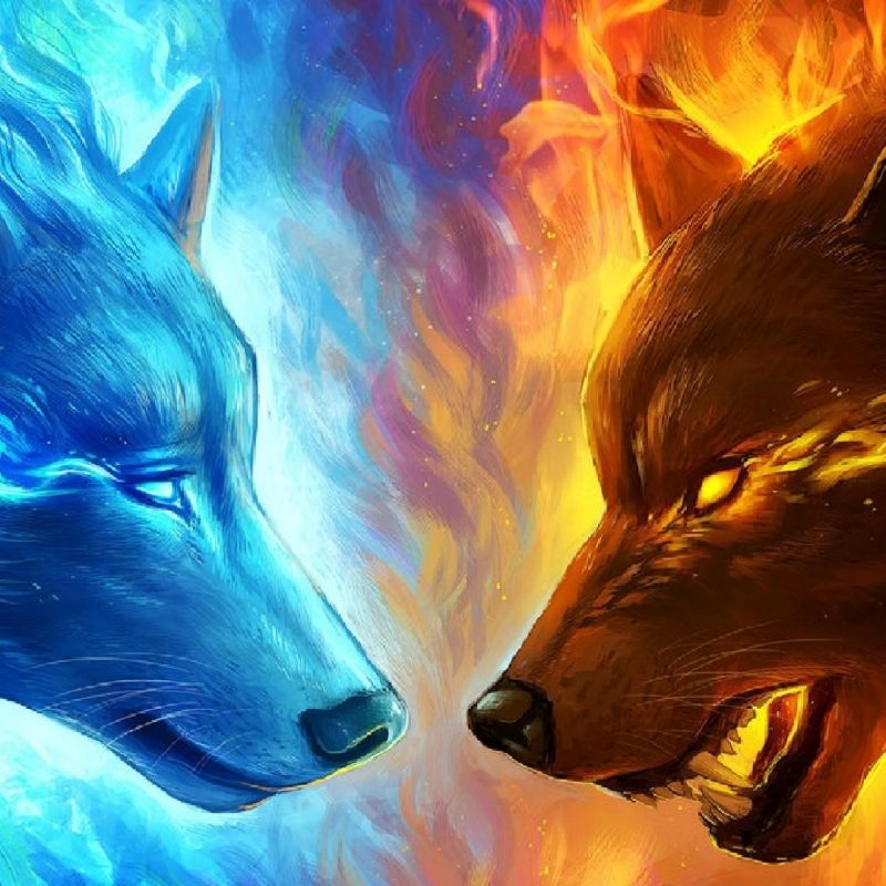 10 Top Cool Pictures Of Wolfs FULL HD 1080p For PC Background 2021 free download cool pictures of wolves impremedia 800x800