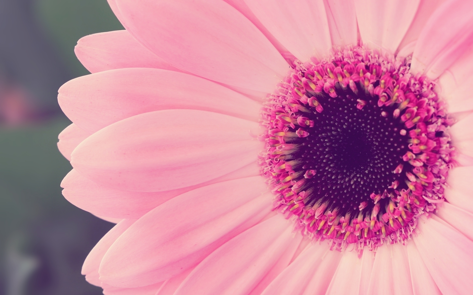 cool pink flower backgrounds #2465 - hdwarena