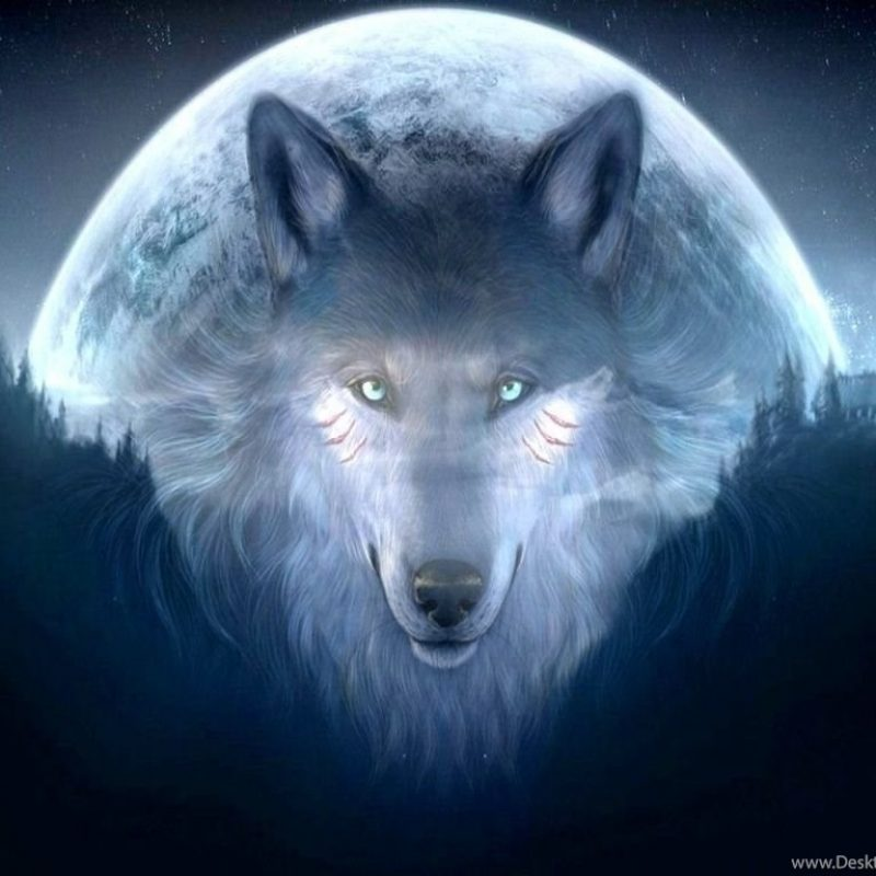 10 Top Cool Pictures Of Wolfs FULL HD 1080p For PC Background 2021 free download cool wolf backgrounds 11071 hd wallpapers in animals imagesci com 800x800