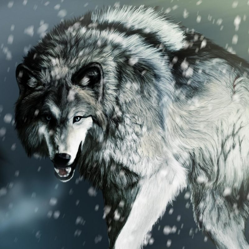 10 Most Popular Cool Wolf Wallpaper Hd FULL HD 1080p For PC Desktop 2020 free download cool wolf wallpaper 61 images 800x800