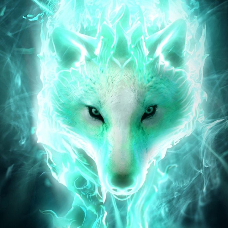 10 Top Cool Pictures Of Wolfs FULL HD 1080p For PC Background 2021 free download cool wolf wallpapers 59 images 800x800