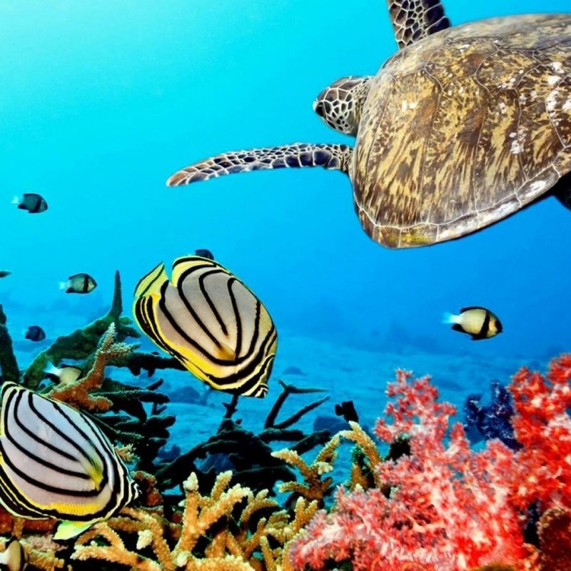 10 Most Popular Coral Reef Hd Wallpaper FULL HD 1920×1080 For PC Desktop 2021 free download coral reef animals wallpaper 84972 800x800